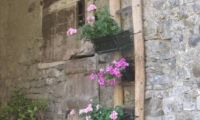 Ca Pina Flowers sm.jpg