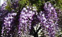 Primavera 2011 (10) sm.jpg